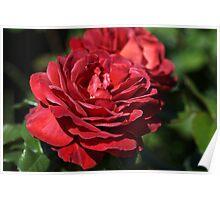 Wonderfully Red Roses Poster