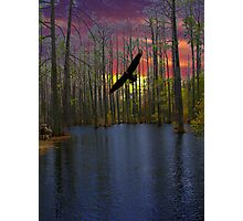 Cypress Sunset Photographic Print