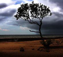 Ocean Rain by Nam Ngueyn