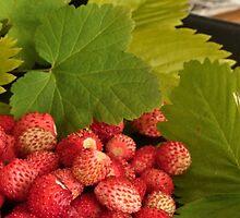 Wild berries by Heather Thorsen