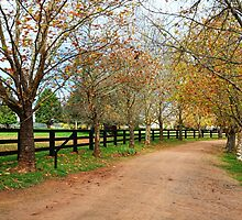 Deciduous tree lined country road in Autumn by Leah-Anne Thompson