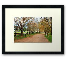 Deciduous tree lined country road in Autumn Framed Print