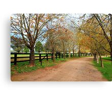 Deciduous tree lined country road in Autumn Canvas Print