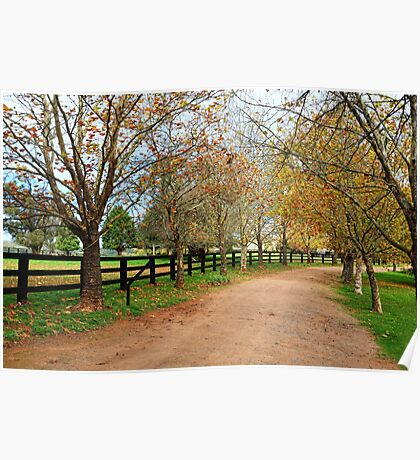Deciduous tree lined country road in Autumn Poster