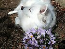 Sylvie And the Spring Crocuses by Jack McCabe