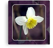 First Daffodil Canvas Print