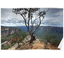 Gum tree at  Burramoki Headland overlooking Grose Valley Australia landscape Poster