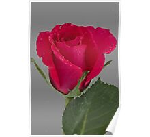Raindrops on Rose Poster