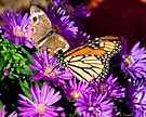 Dancing in the Asters by Mary Campbell