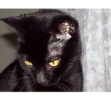 syco kitty Photographic Print