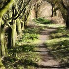 Woodland path by John Edwards