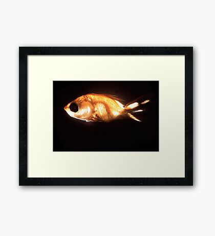 Glowfish Framed Print