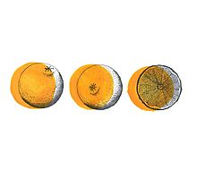shifty orange  Photographic Print