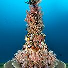 Neptuns Christmas Tree by Norbert Probst