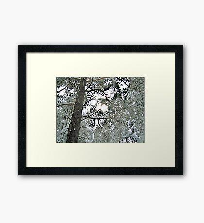 Beautiful Giants Framed Print