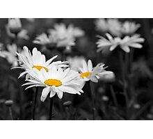 Daisy Eyes Photographic Print