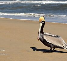 Waiting For You by Sandy Woolard