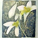 white lilies by Claudia Dingle