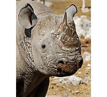 Black Rhino, Etosha, Namibia. Photographic Print