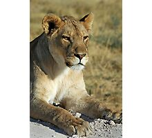 Lioness, Etosha, Namibia. Photographic Print
