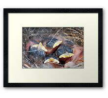 Newly-hatched chickadees Framed Print