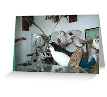 Fabulous Birds Greeting Card