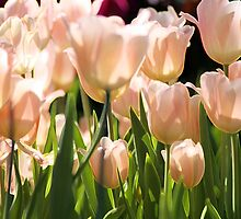 Peach Tulips by Kathleen Struckle