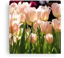 Peach Tulips Canvas Print
