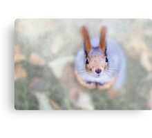 Squirrel looks at you from the bottom up Canvas Print