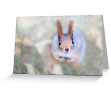 Squirrel looks at you from the bottom up Greeting Card