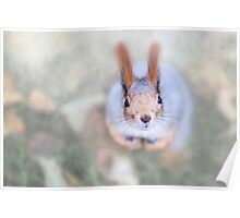 Squirrel looks at you from the bottom up Poster
