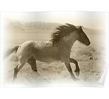 Run Wild Poster