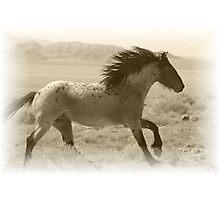 Run Wild Photographic Print