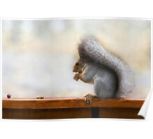 Squirrel on a bench and some nuts Poster