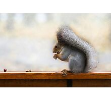 Squirrel on a bench and some nuts Photographic Print