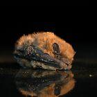 Bat on my sunroof by Tony Hadfield