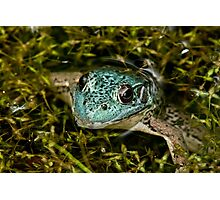 Green Frog (Blue Variant) Photographic Print