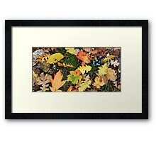 Shapes and colors Framed Print