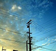 Little Birds by annnna