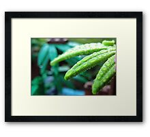 Morning in the jungle Framed Print
