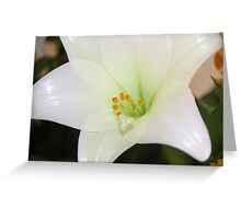 Pollen drops Greeting Card