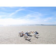 Meanwhile, on a nearby beach, birds. Photographic Print