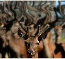The Dreams of Deer 1 by Wayne King