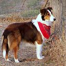 This is Bandit by pictureman65622