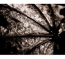 Leaf Spine Photographic Print