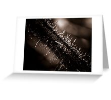 Wet thorns Greeting Card