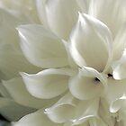 Vanilla Cream by Nancy Polanski