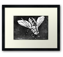Bush Blowie Framed Print