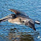 Pelican Flyby by imagetj