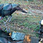 Wild Turkey Togetherness by imagetj